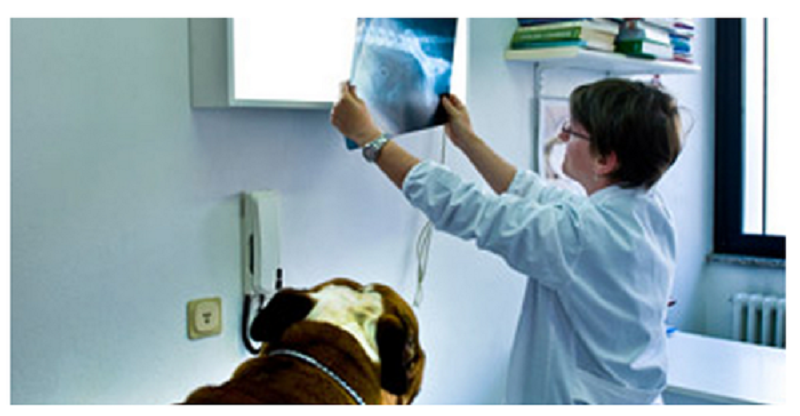 Veterinary X-Ray
